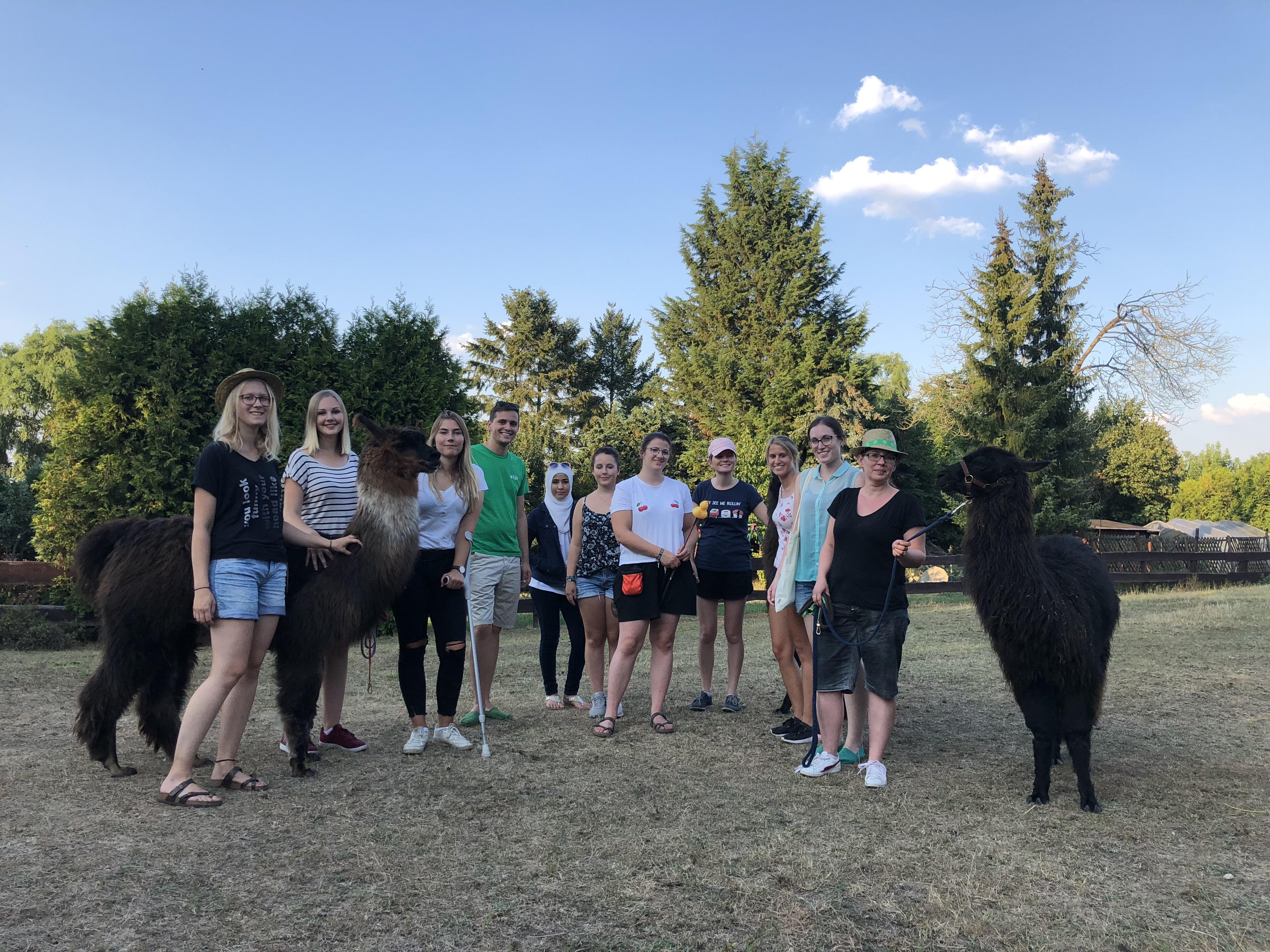 Lama-Wanderung in Lampertheim